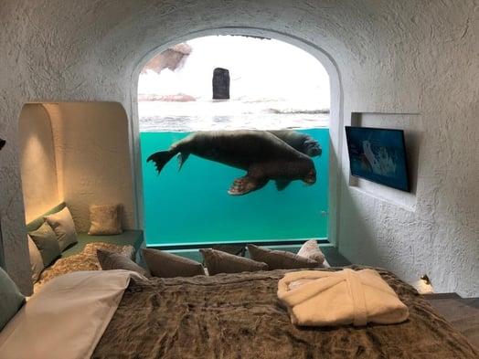 Pairi Daiza walrus house interior