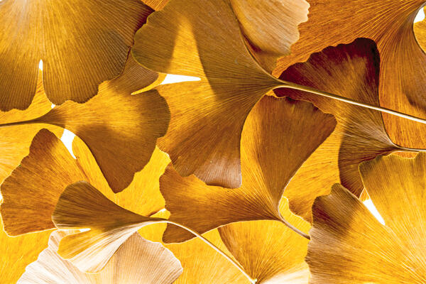 fortuna gold layered leaves