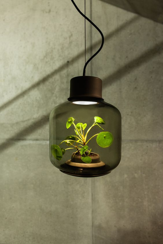 A lamp containing a self-sustaining ecosystem. Find out more over at Ignant.com.